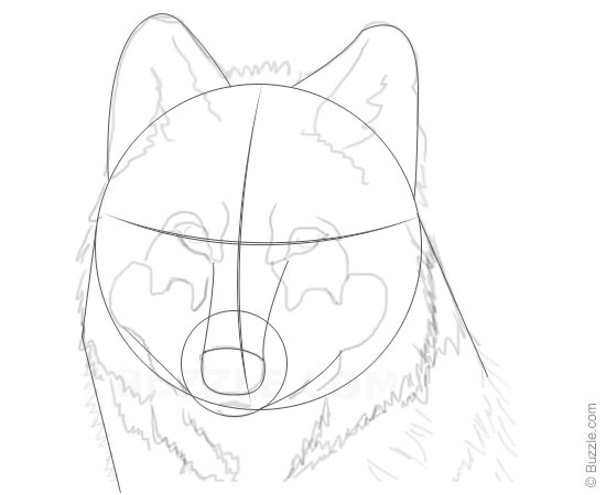 550x450 Step By Step Instructions For Beginners To Draw A Wolf