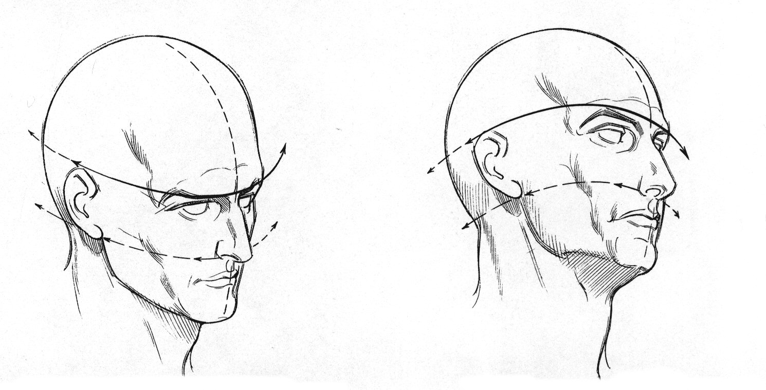 head structure drawing at getdrawings com free for personal use