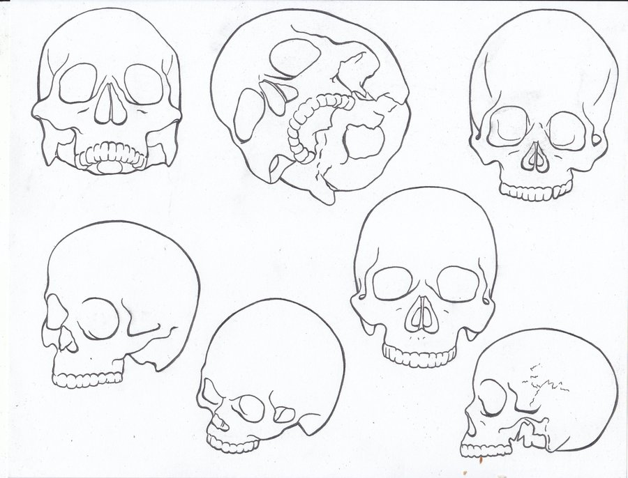 900x686 Line Drawing Skull Study By Theannastazia