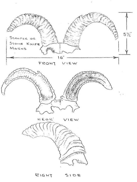 567x754 Example Of Pen And Ink Sketch Of Possible Bighorn Sheep Headdress