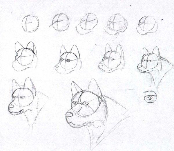600x521 How I Draw Dog Heads By Avatardsunite