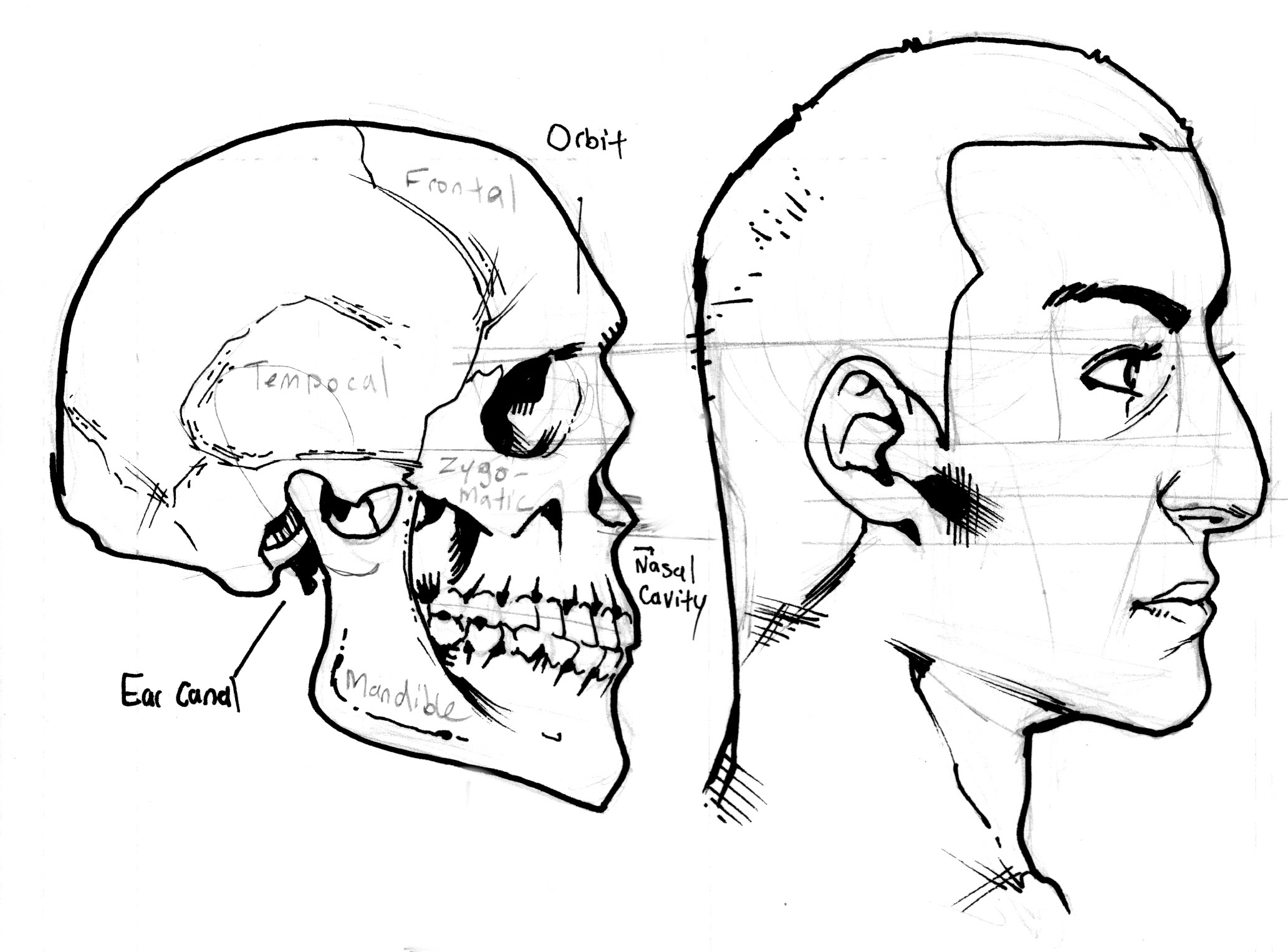 2066x1527 How To Draw Profiles (Human Heads From The Side) Part 1