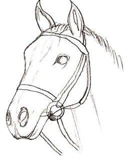 250x313 How To Draw A Horse Head