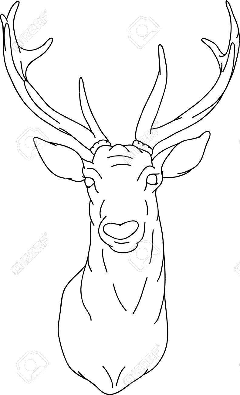 791x1300 Coloring Pages Drawings Of Deer Heads Male Sketch Coloring Pages