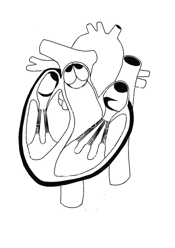 600x848 Human Heart Coloring Pages Healthy Heart In Human Anatomy Coloring