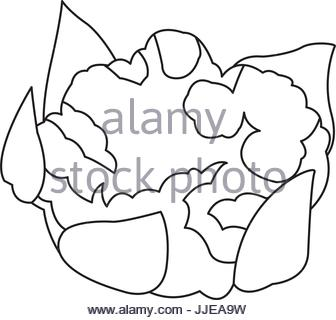 336x320 Drawing Cauliflower Vegetable Nutrition Food Healthy Stock Vector
