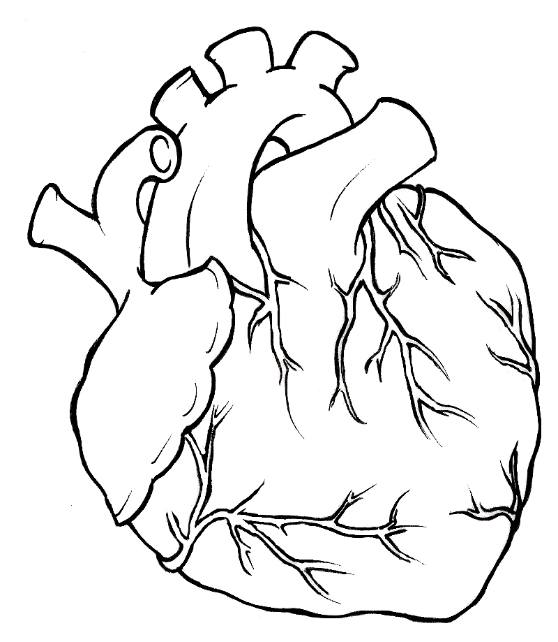 800x919 Human Heart Tattoo By ~metacharis On Tattoos