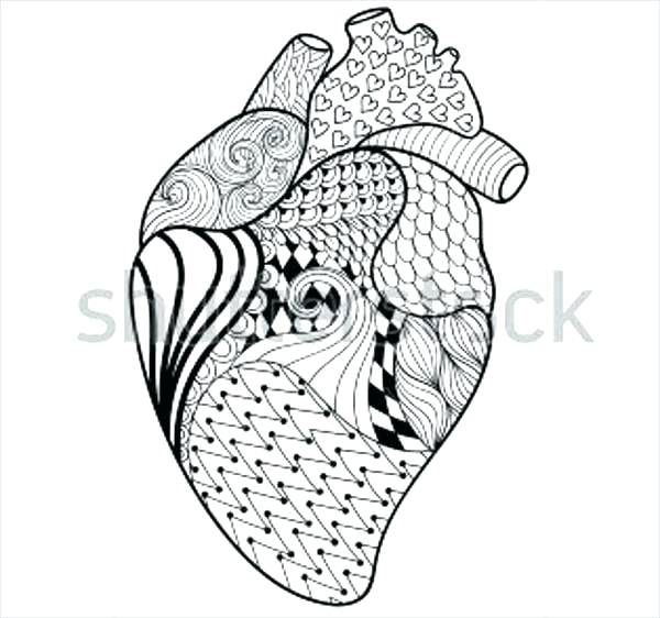 600x562 Heart Anatomy Coloring Pages Human Heart Coloring Pages Free