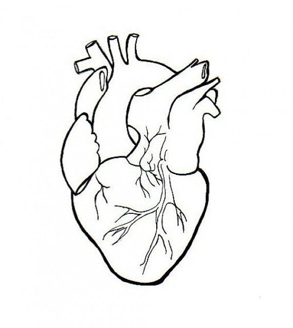 570x638 Human Heart Embroidery Anatomical Line Art Simple Embroidery