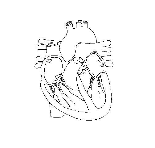 Heart and labels drawing at getdrawings free for personal use 503x480 human heart diagram without labels tenderness ccuart