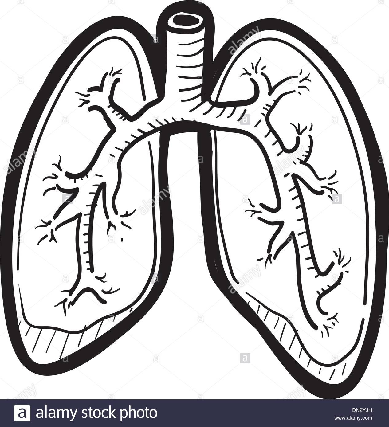 1266x1390 Human Lung Sketch Stock Vector Art Amp Illustration, Vector Image