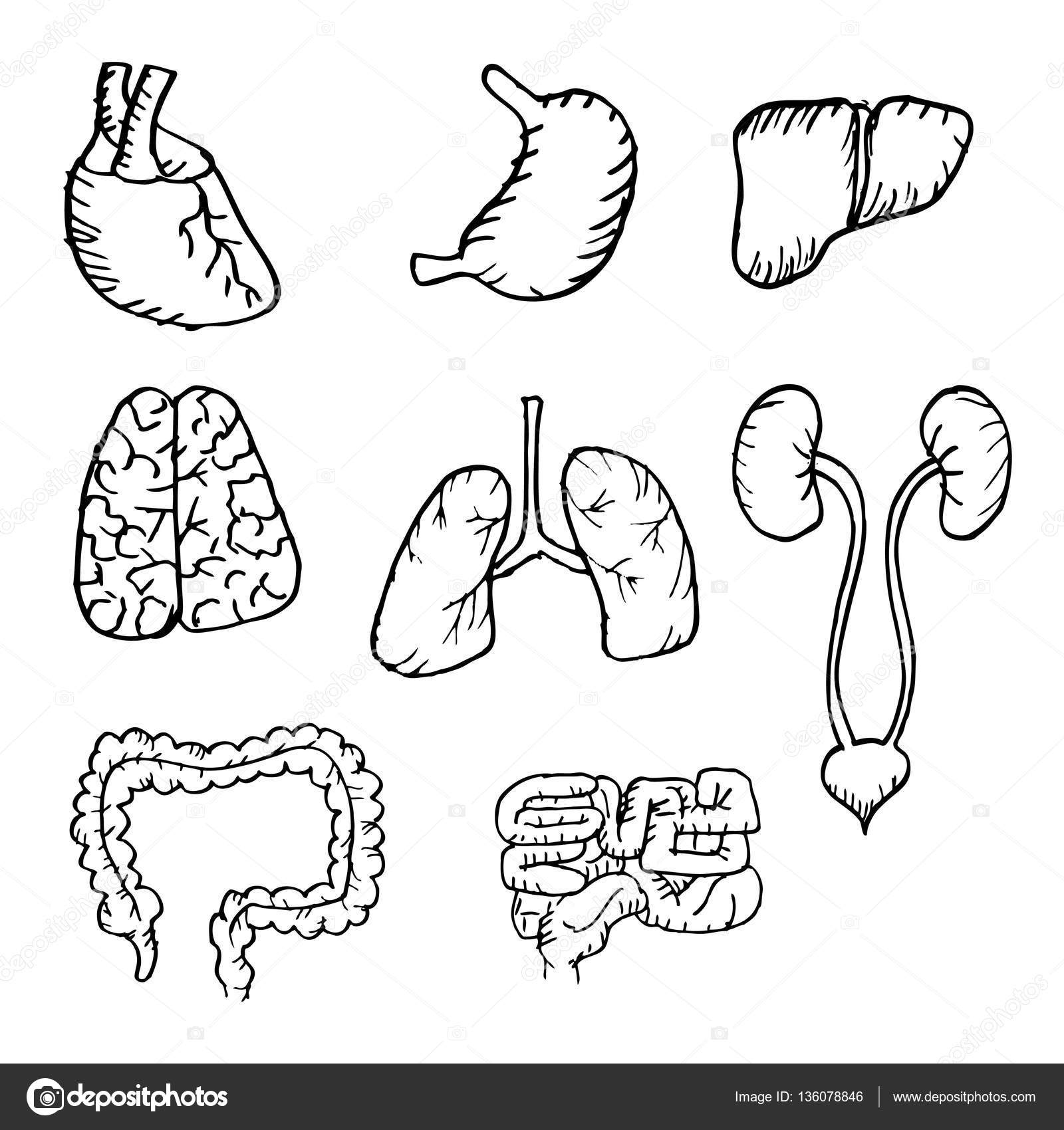 1600x1700 Internal Human Organs Hand Drawn Icons Set