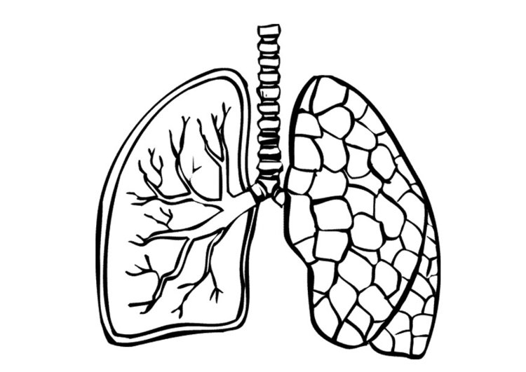 750x531 Lungs Coloring Page Lungs Coloring Page Printable