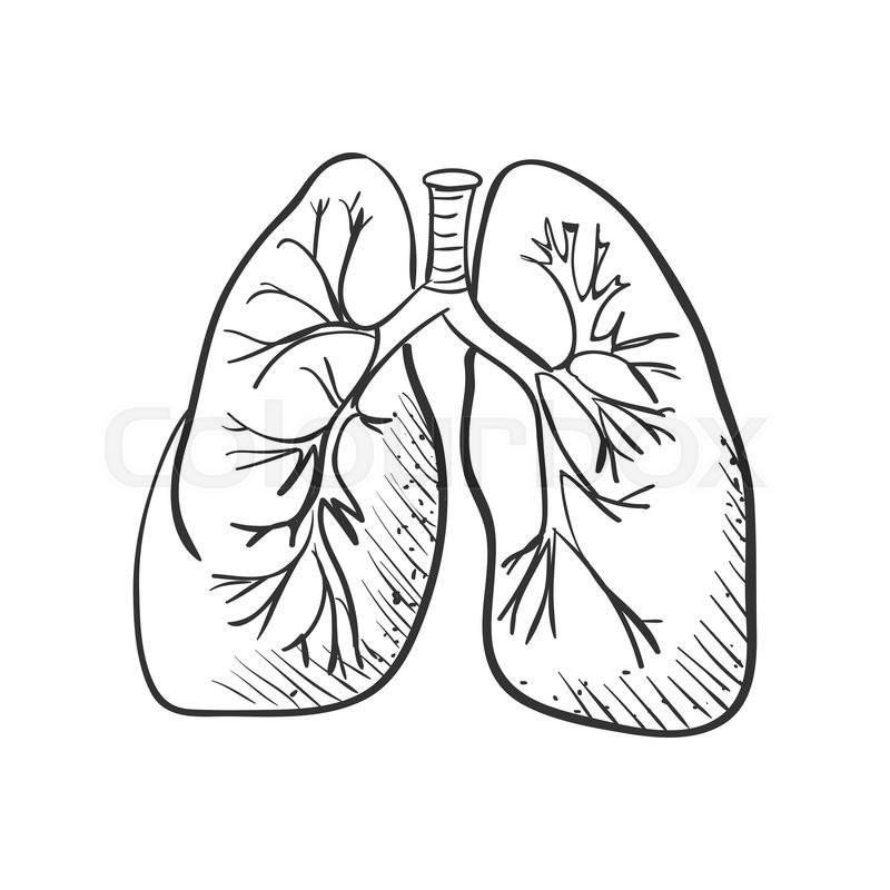 800x800 Lungs Doodle Drawing, Medical Background. Excellent Vector