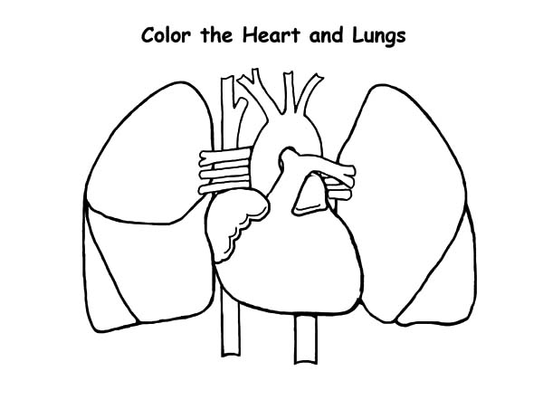 heart and lungs drawing at getdrawingscom free for