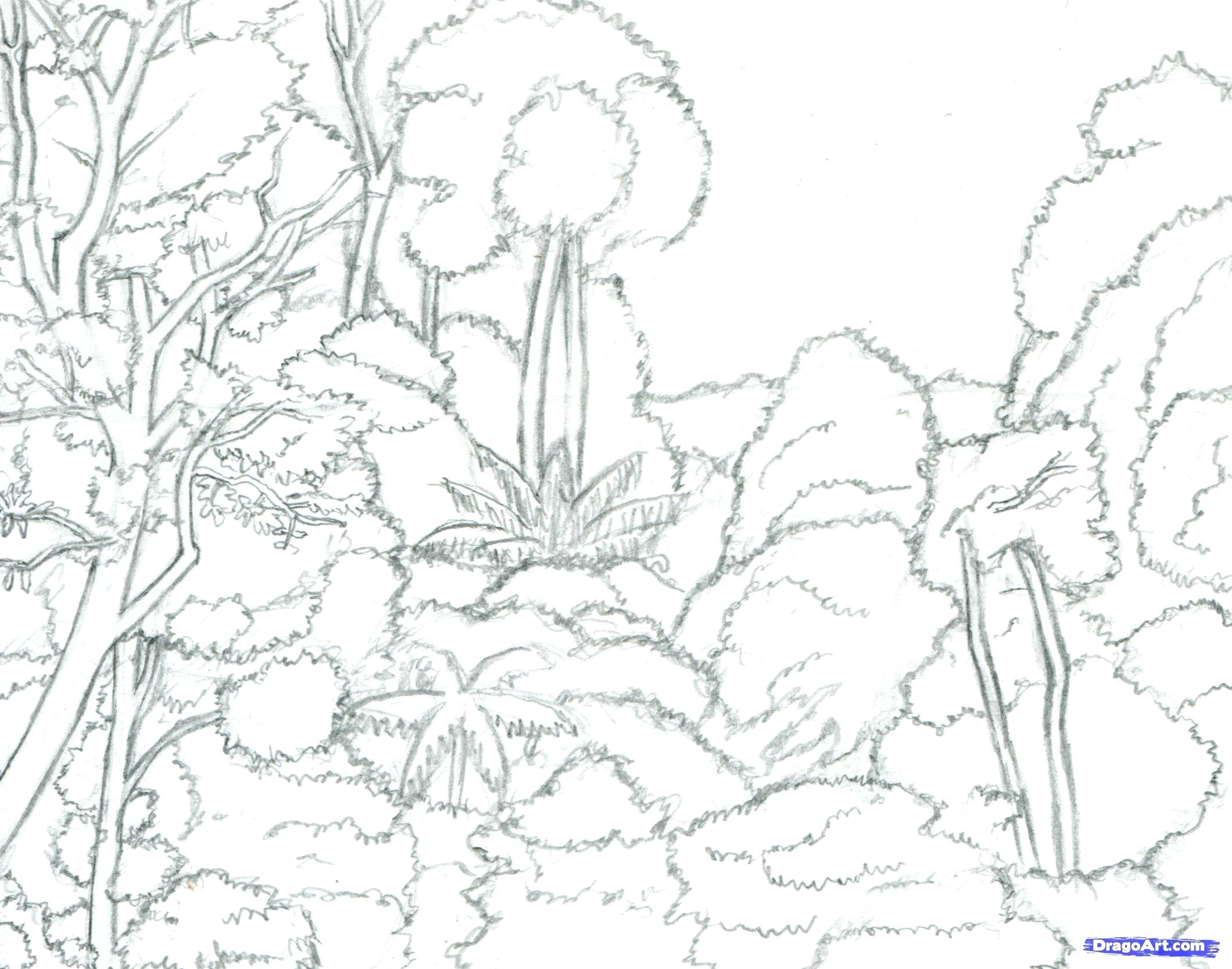 2120x1667 Diagram Tropical Rainforest Layers Diagram Plants Drawings