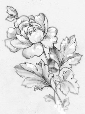 288x387 Drawings Of Roses In Pencil