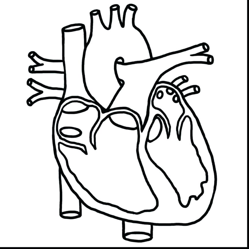 863x863 Human Heart Coloring Page Heart Human Heart Diagram Coloring Page