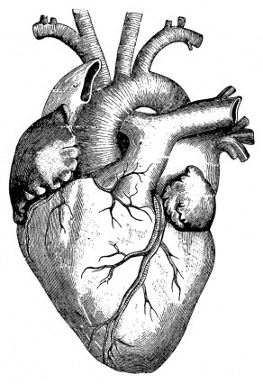 292x426 Cardiac Development Needs More Than Protein Coding Genes Mit News