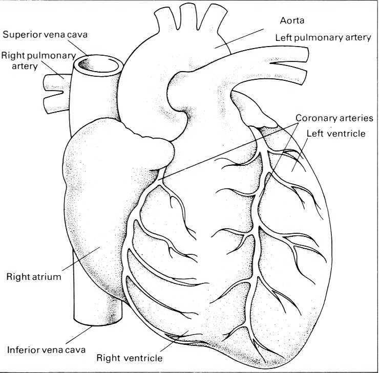 heart disease drawing at getdrawings com