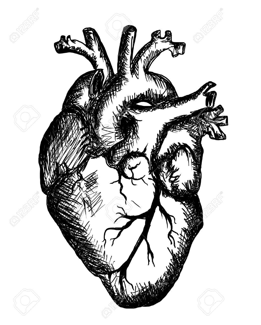 1043x1300 Heart Drawing On White Background Stock Photo, Picture And Royalty