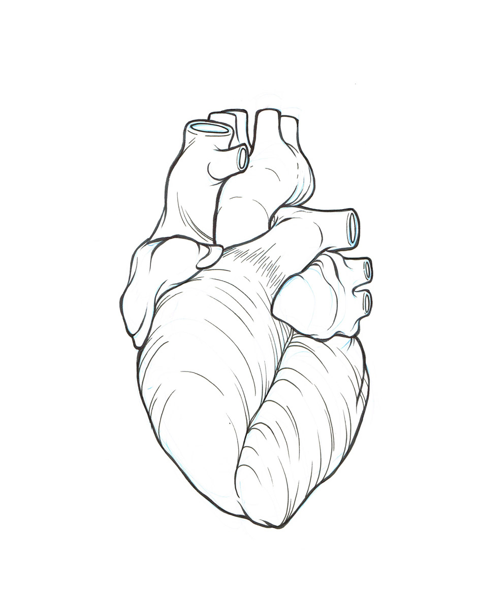 943x1200 Real Heart Simple Human Heart Drawing Clipart