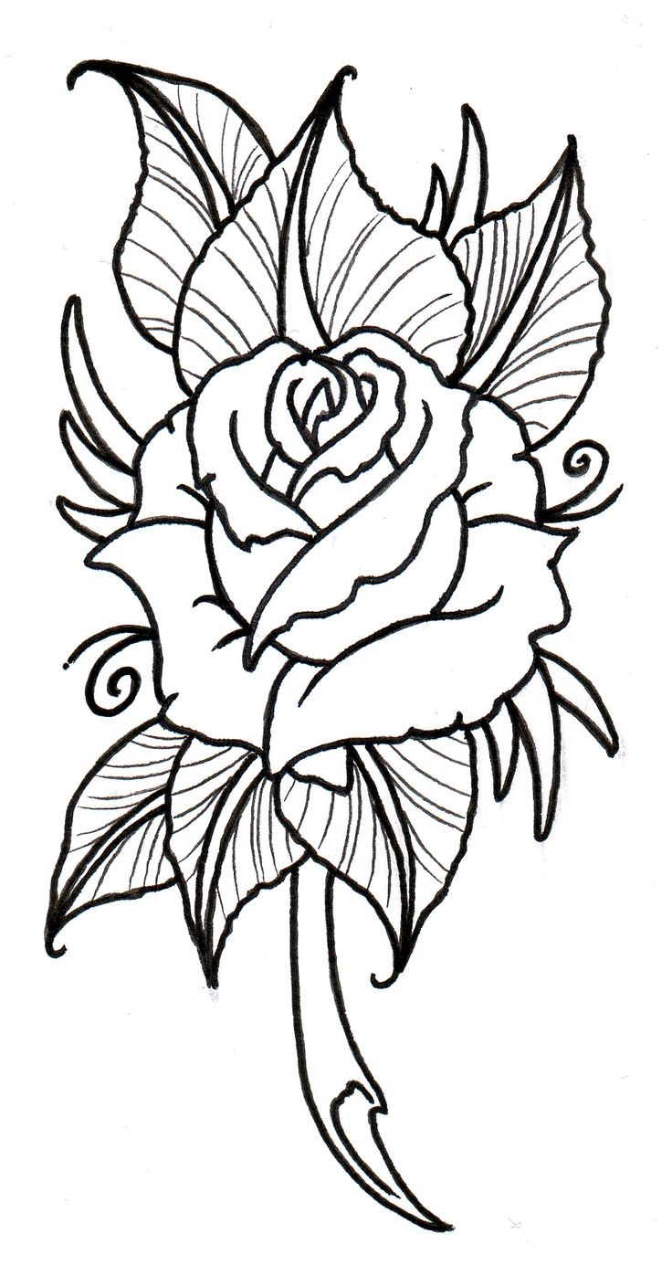 736x1397 Drawing Ideas Flowers Flowers And Heart Drawings Best Easy