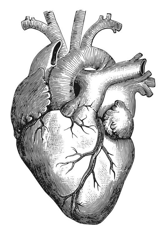 531x750 Coloring Page Heart