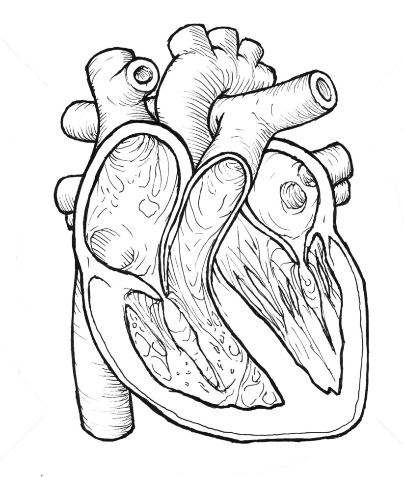 823x970 Some Heart Study For A Clay Model By Yardne