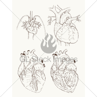 325x325 Hand Drawing Sketch Anatomical Heart. Doodle Zentangle Ve Gl