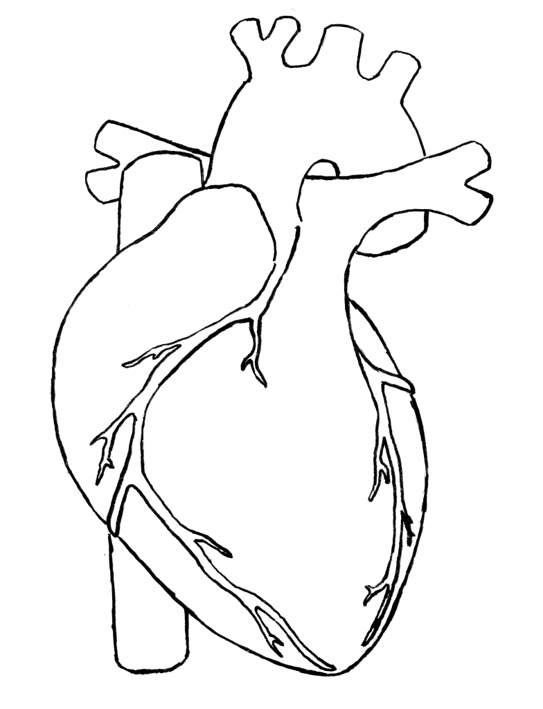 784x1024 Drawing Of A Human Heart Human Heart Drawing Drawing Images