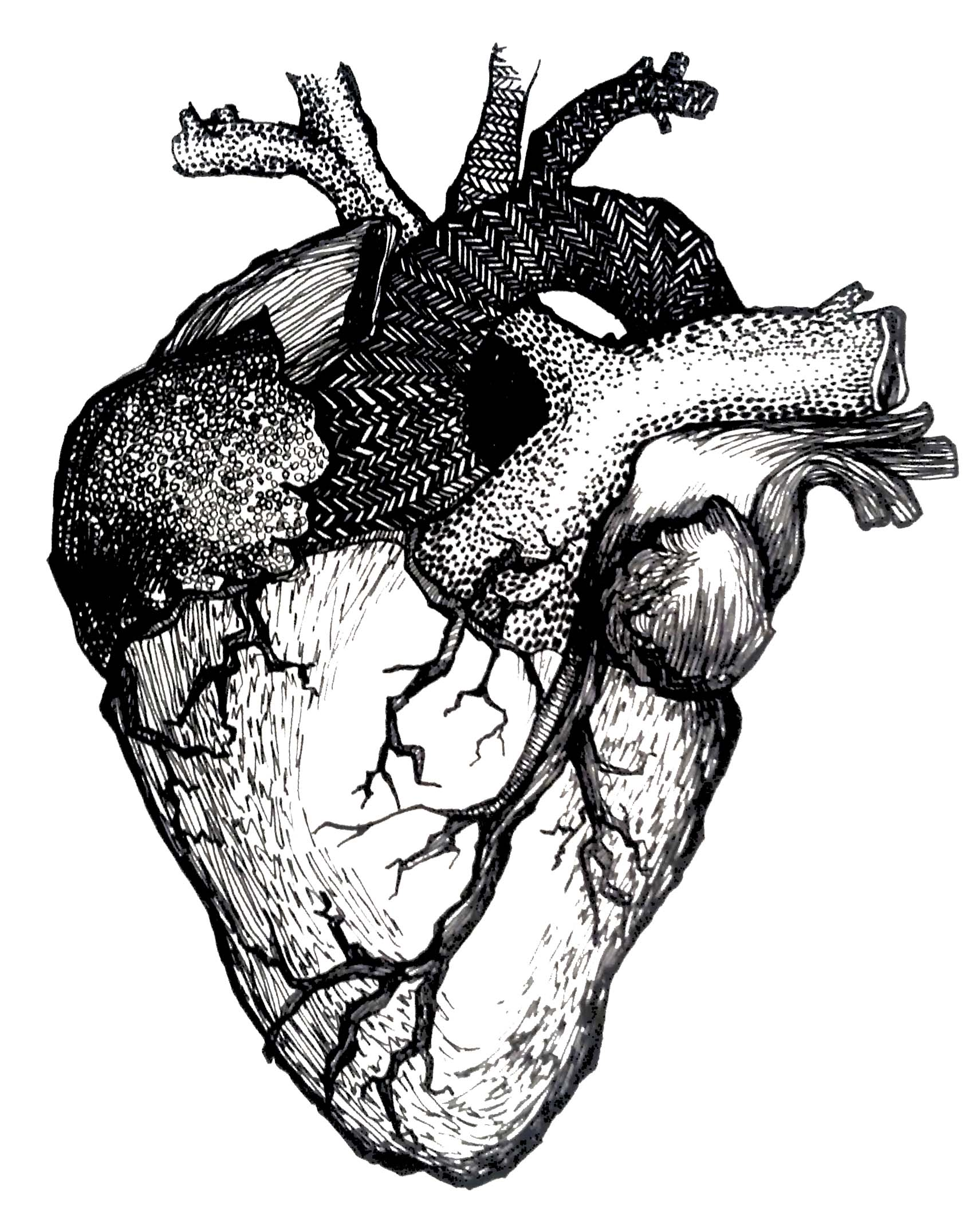 1711x2124 Anatomical Drawing Of Human Heart Google Search Anatomy Clip
