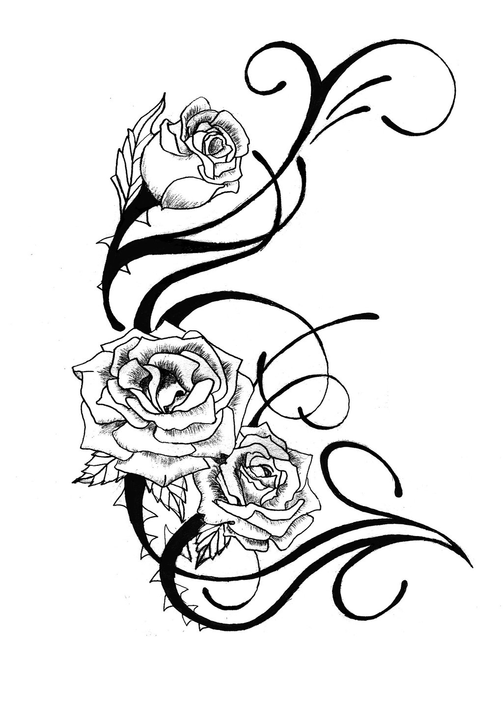 1024x1453 Knumathise Realistic Rose Drawing Outline Images