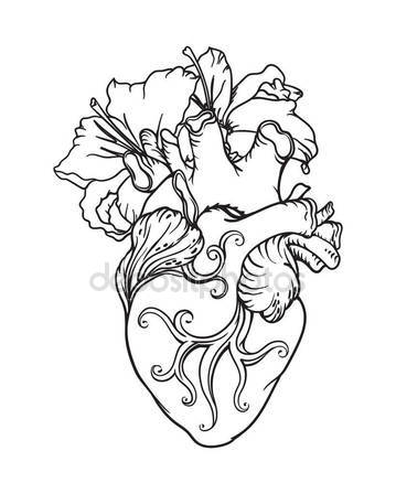 359x448 Stylized Anatomical Human Heart Drawing. Heart With White Lilies