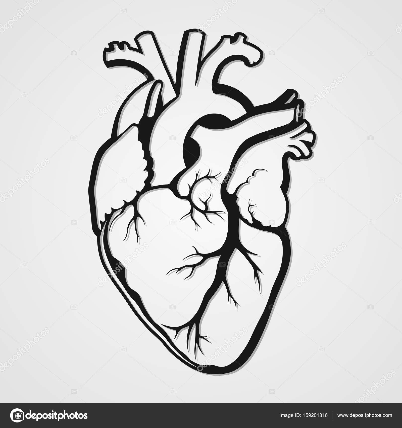 1600x1700 Black Human Heart Stock Vector Vlad210498