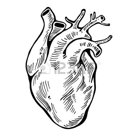 450x450 Human Heart Black Line, Tattoo, Organ Vector Illustration Royalty