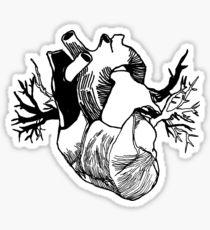 210x230 Anatomy Body Heart Organ Drawing Stickers Redbubble
