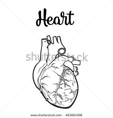 450x470 Anatomical Human Heart, Sketch Hand Drawn Illustration Isolated