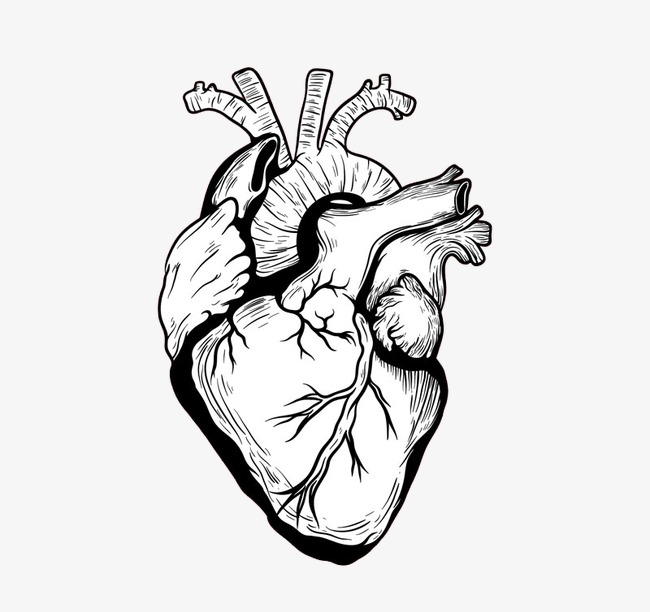 650x612 Hand Painted Heart, Heart, Organ, Human Body Png Image For Free