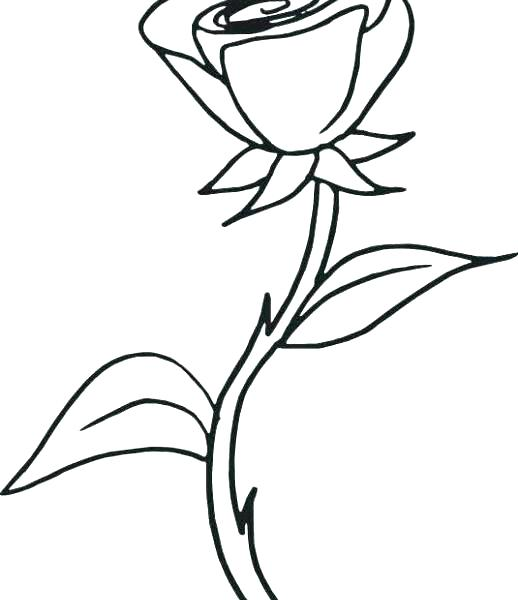 518x600 Good Roses Coloring Pages New Hearts And Tied With Ribbon Page