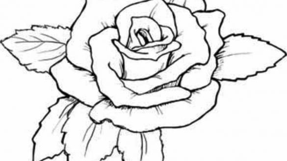 585x329 Coloring Book Roses Pages With Heart Rose Sketch P On Valentines