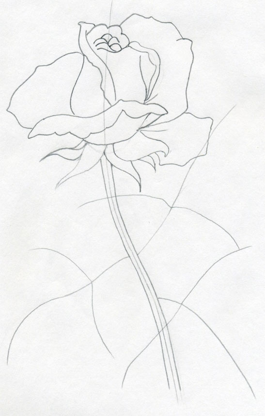 547x857 Draw A Rose Quickly, Simply And Easily