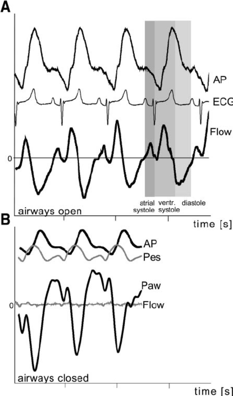 850x1440 Heartbeat Induced Pressurend Fl Ow In Representativenimal.