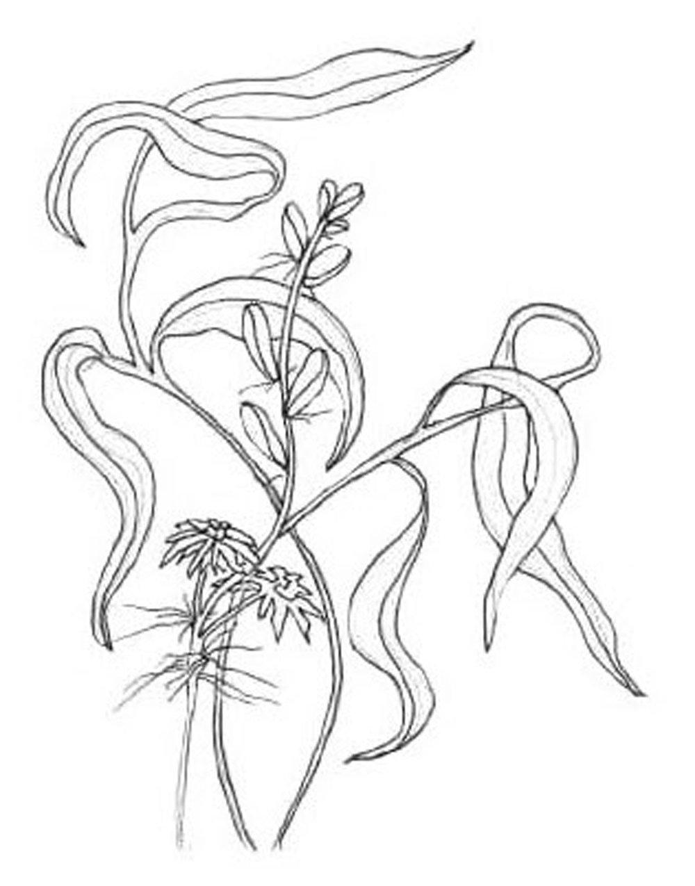 1000x1275 Illustration Fawn Heather Talmon