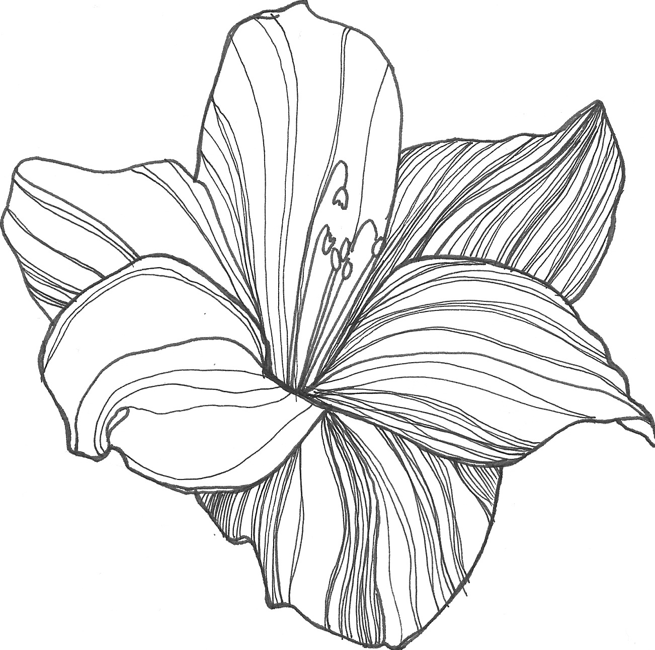 1302x1292 Line Drawing Of A Flower