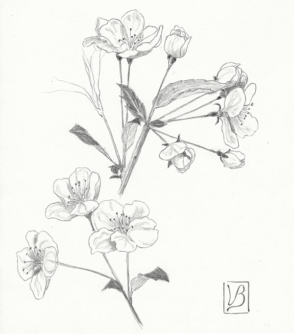 600x682 Plants And Botanical Art Drawings