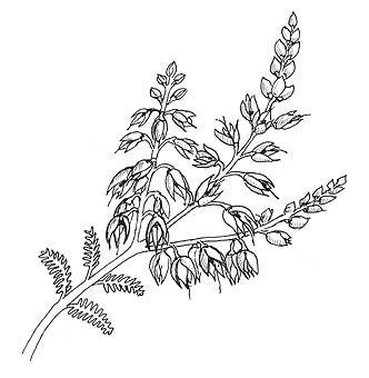 332x340 Flowering Heather Art