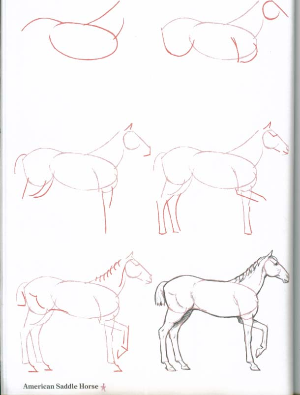 610x803 How To Draw Horses