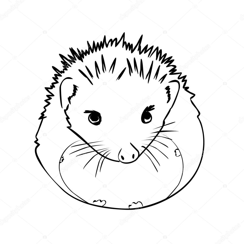 1024x1024 Hedgehog Sketch Drawing Isolated Stock Vector Chaos 08.bk.ru