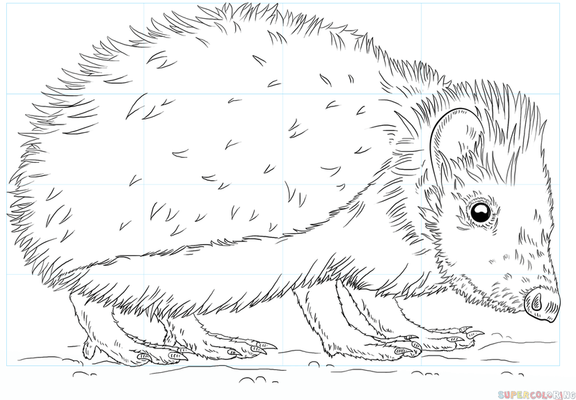 828x575 How To Draw A Hedgehog Step By Step Drawing Tutorials